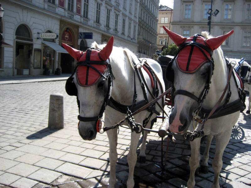Rund um den Stephansdom findet Ihr zahlreiche Pferdekutschen